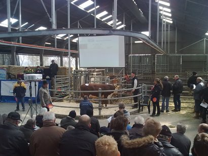 Succesvolle stierenveilig cot Toldijk