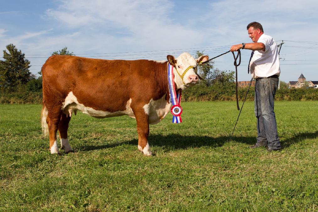 Kuipers kampioen en reservekampioen bij vrouwelijke dieren