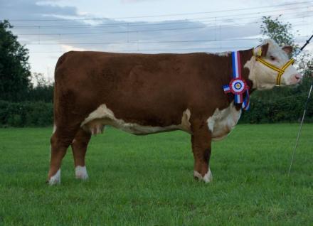 Twee excellente koeien voor Kuipers en Oost